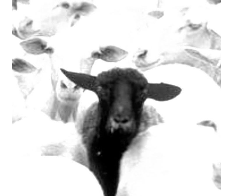 sei la pecora nera?