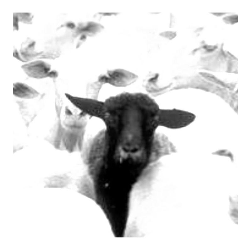 costellazioni familiari e pecora nera